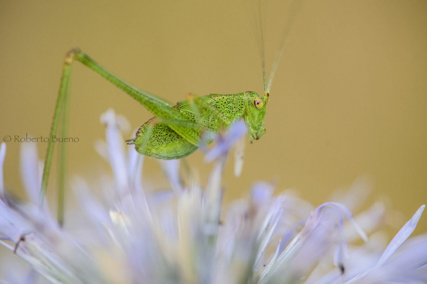 1 centímetro de verde vida