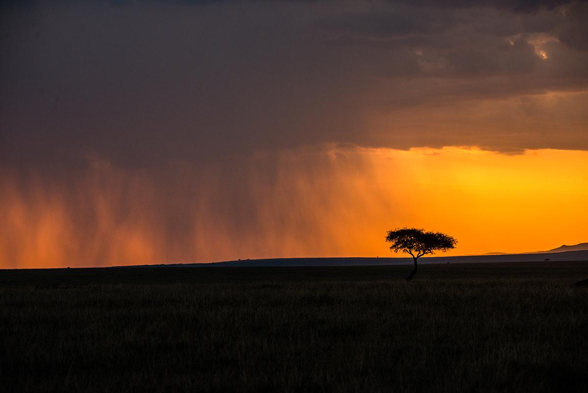 TORMENTA EN LA SABANA AFRICANA.