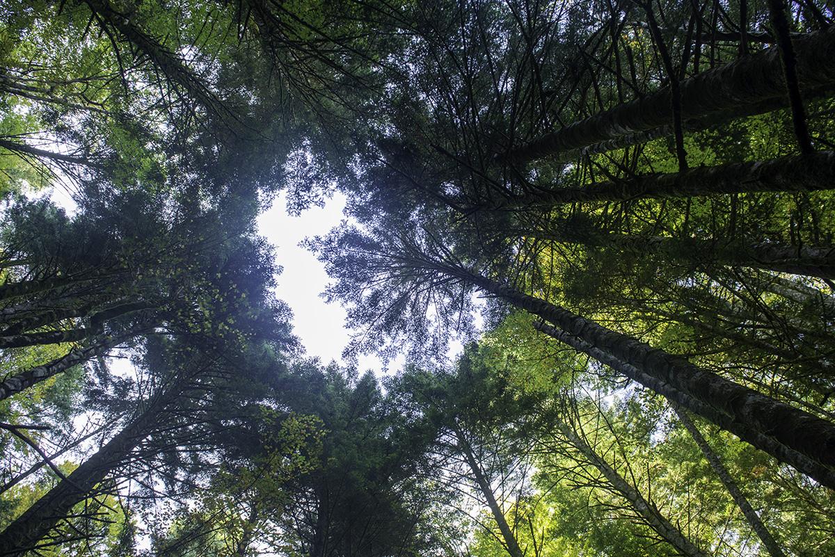 El ojo del bosque