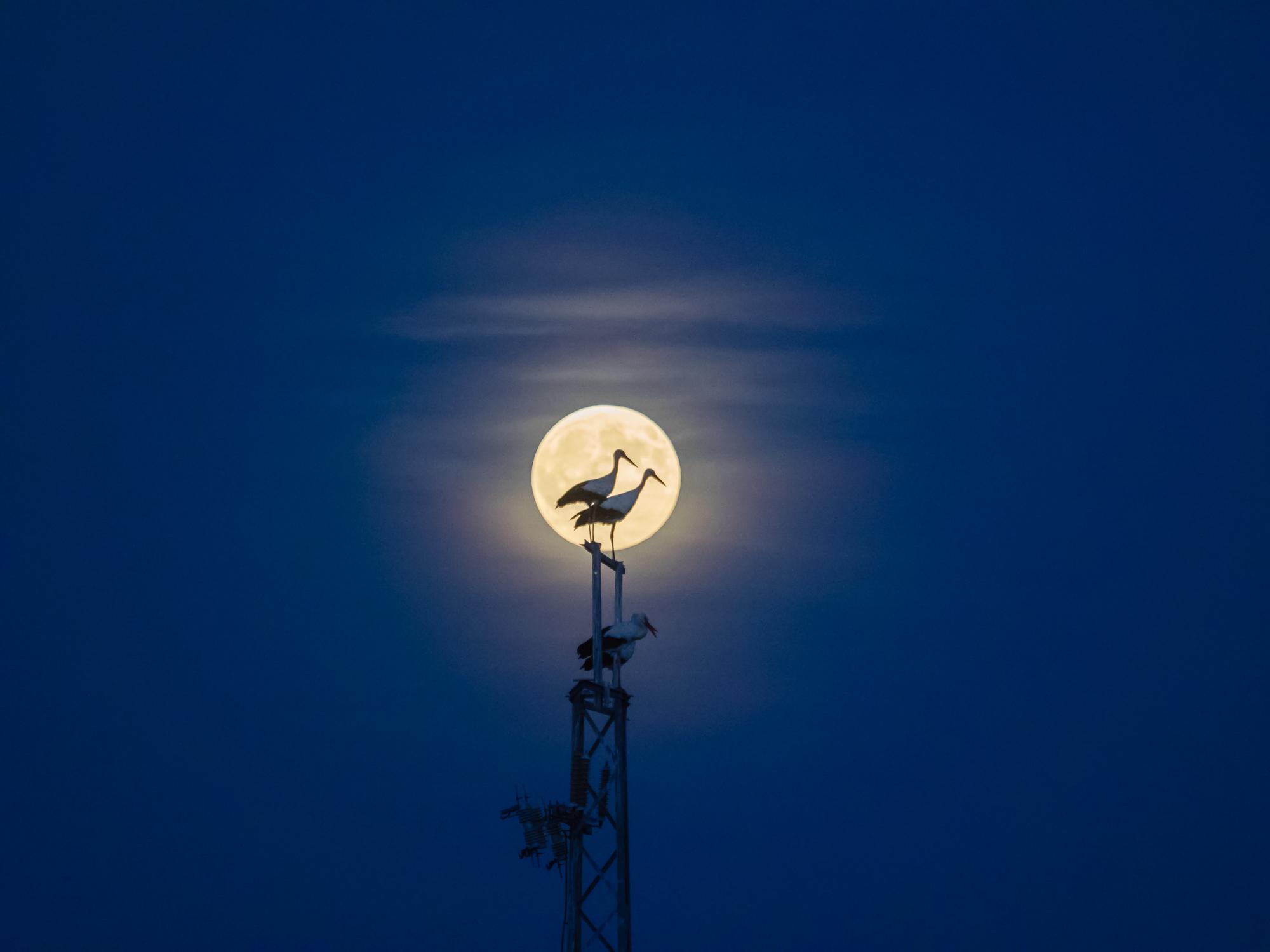 Cigüeñas con la luna encendida