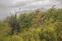 Día de tormenta en la sierra de Ayllón