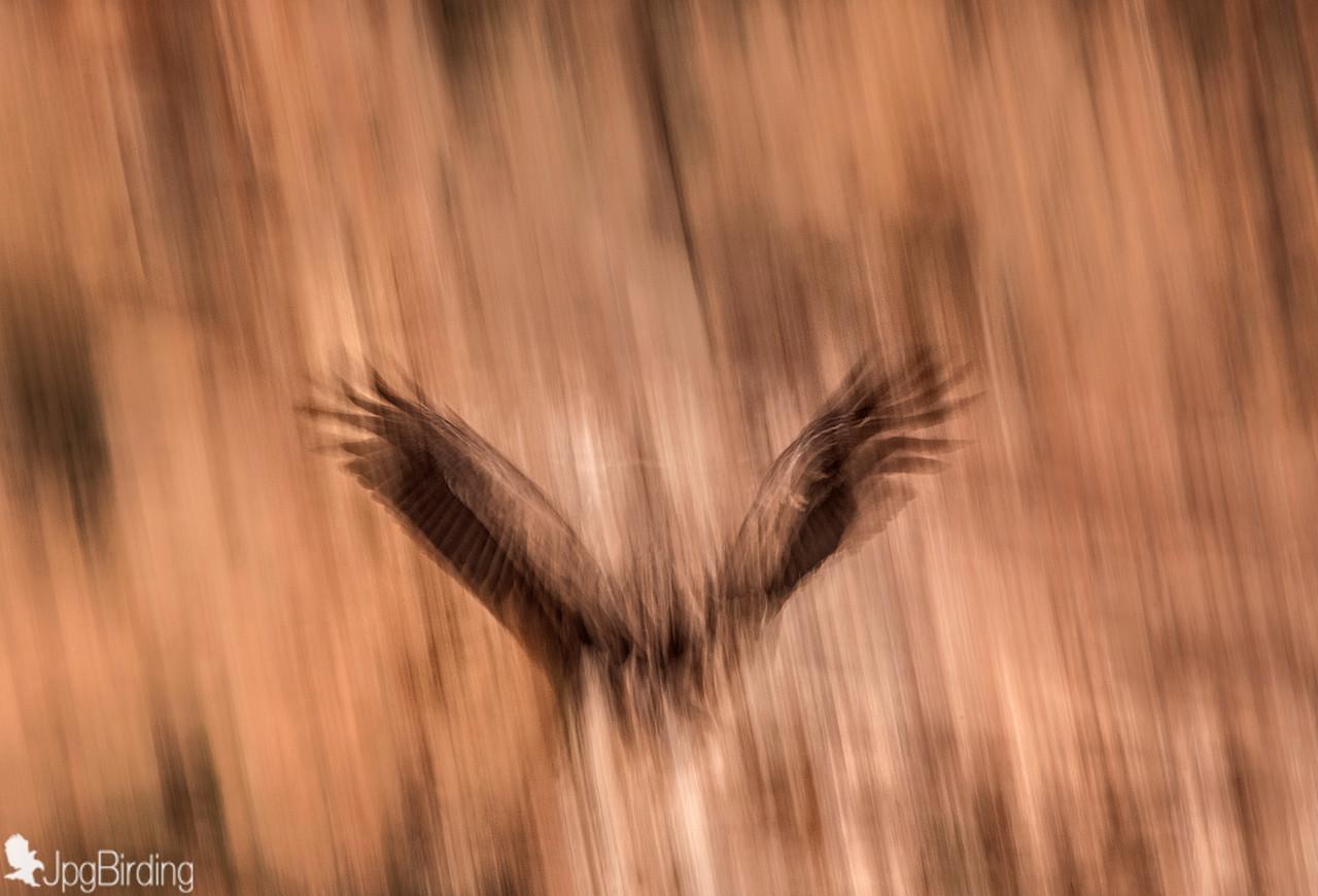 Just Wings
