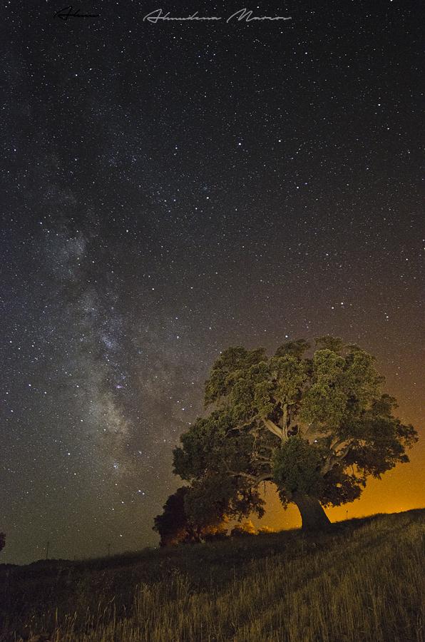Milky tree