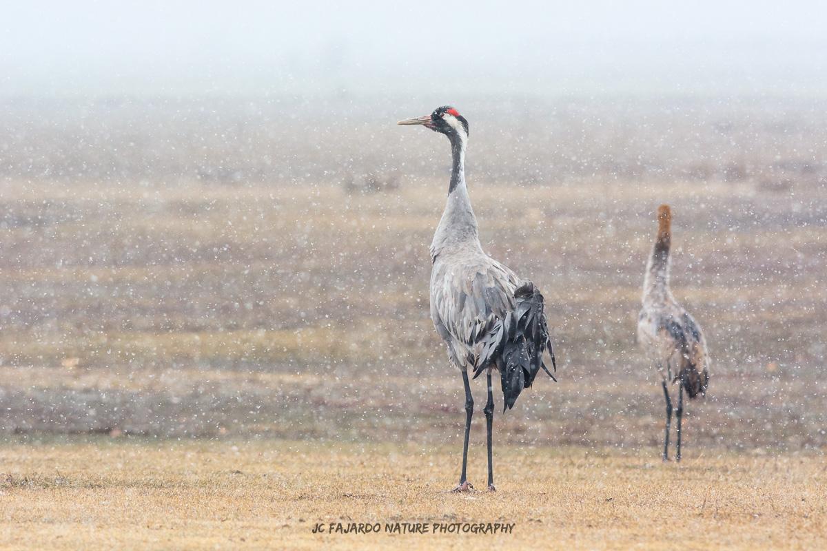 Aves del invierno
