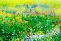 Los colores de la primavera