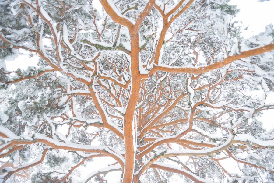 Las venas del árbol