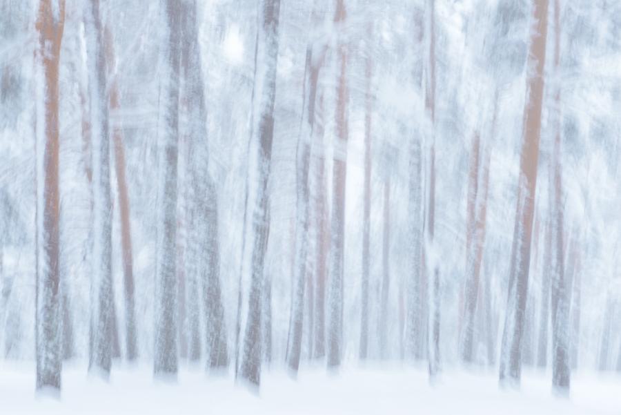 Perdidos en la nieve