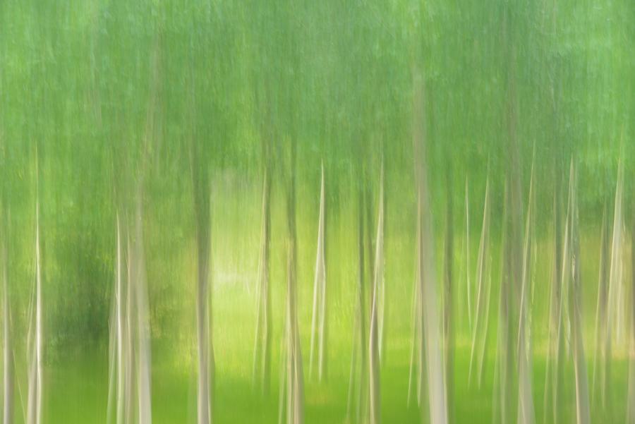 Chopera verde