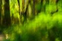 Vapor verde