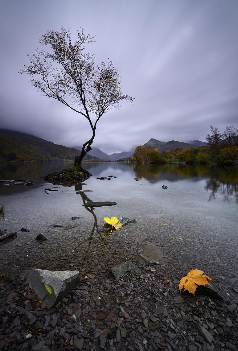 Tras las huellas del otoño