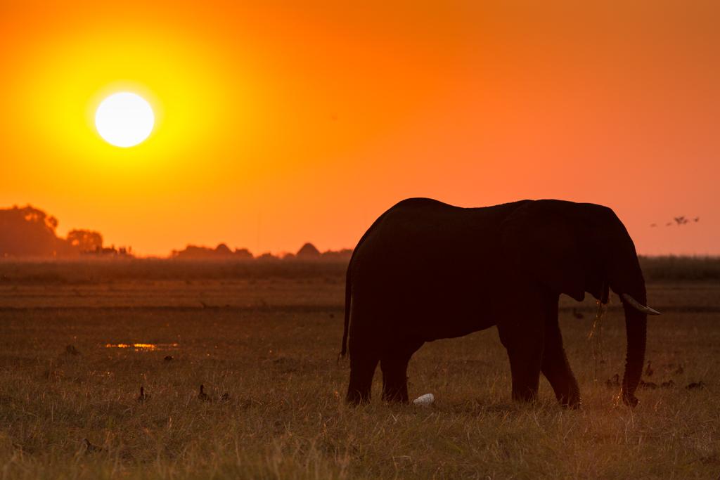 Esencia de África