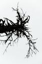 Rorschach Tree