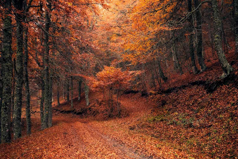 Caminos al paraiso