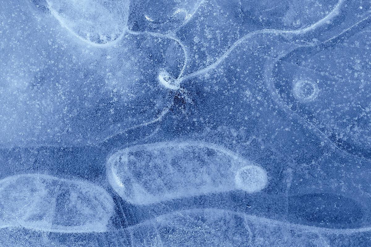 Izotzezko kapritxoak (Caprichos de hielo)