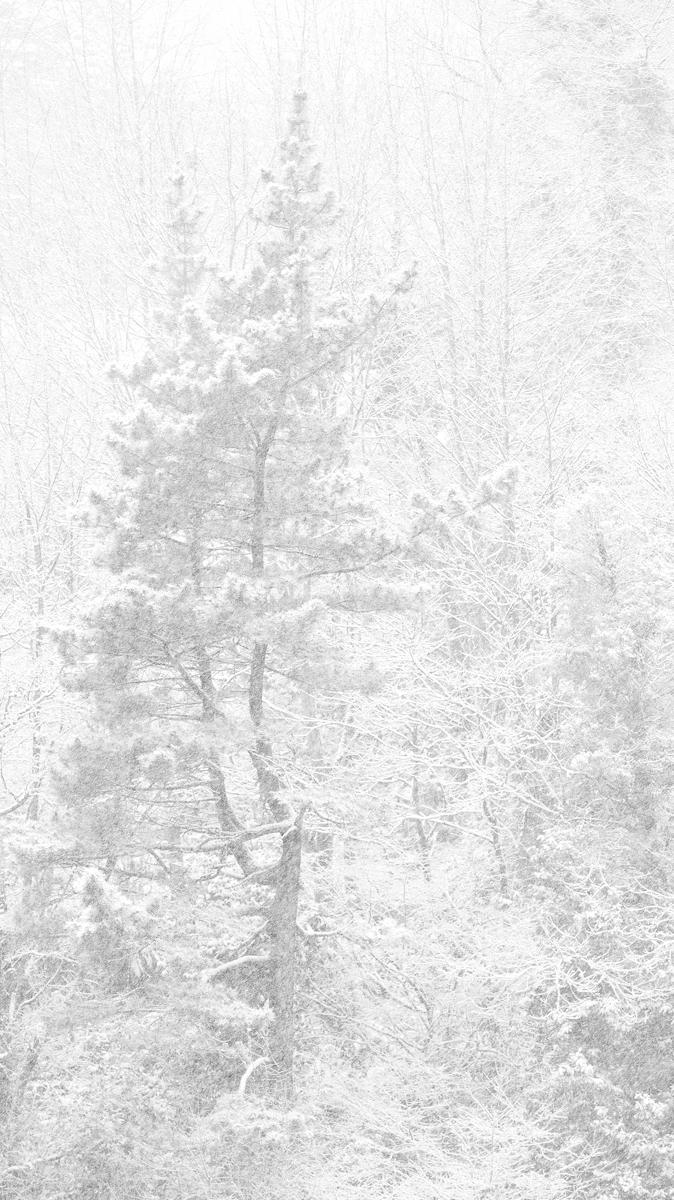 Erraldoi elurtuak (Gigantes nevados)
