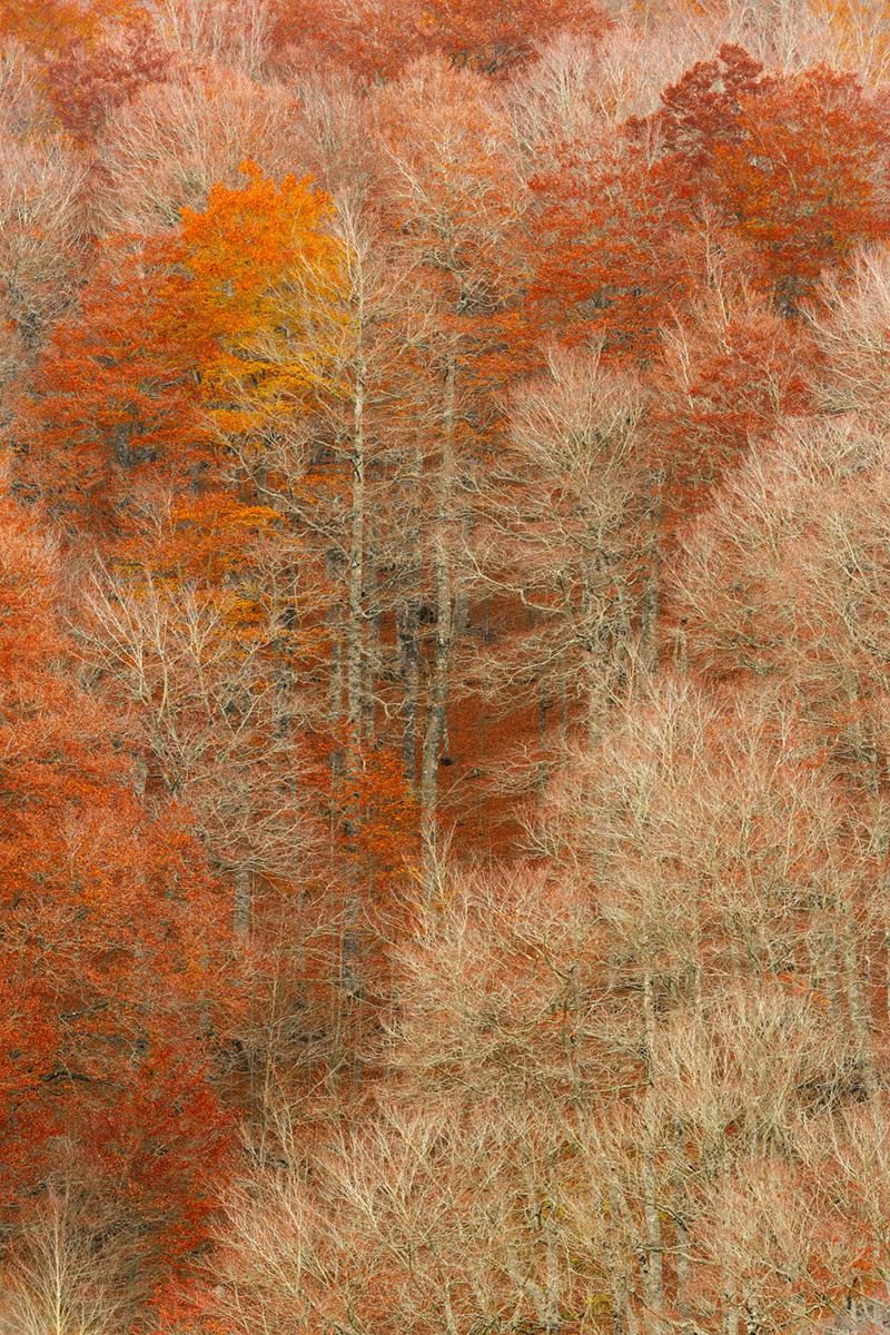 Udazkeneko bihotza (Corazón de otoño)