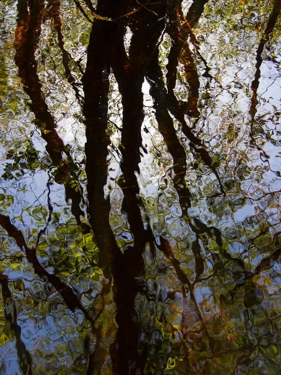 Reflejos en la Lagoa