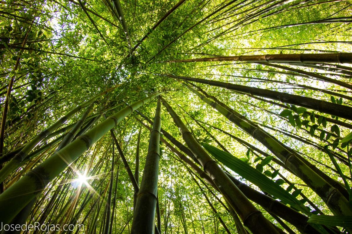 A pie del Bambú