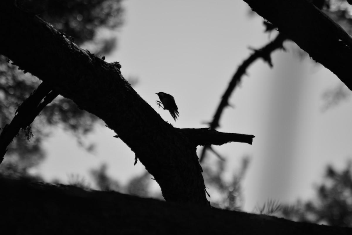 El duendecillo del bosque