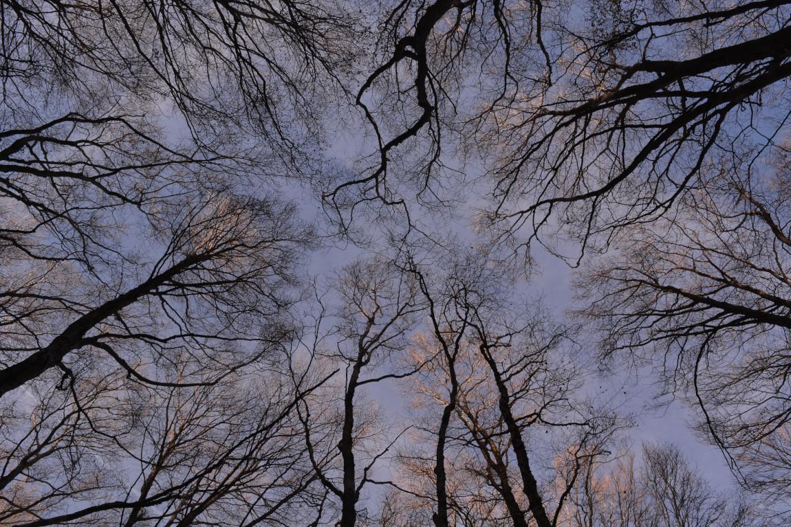 El sabor de un bosque invernal