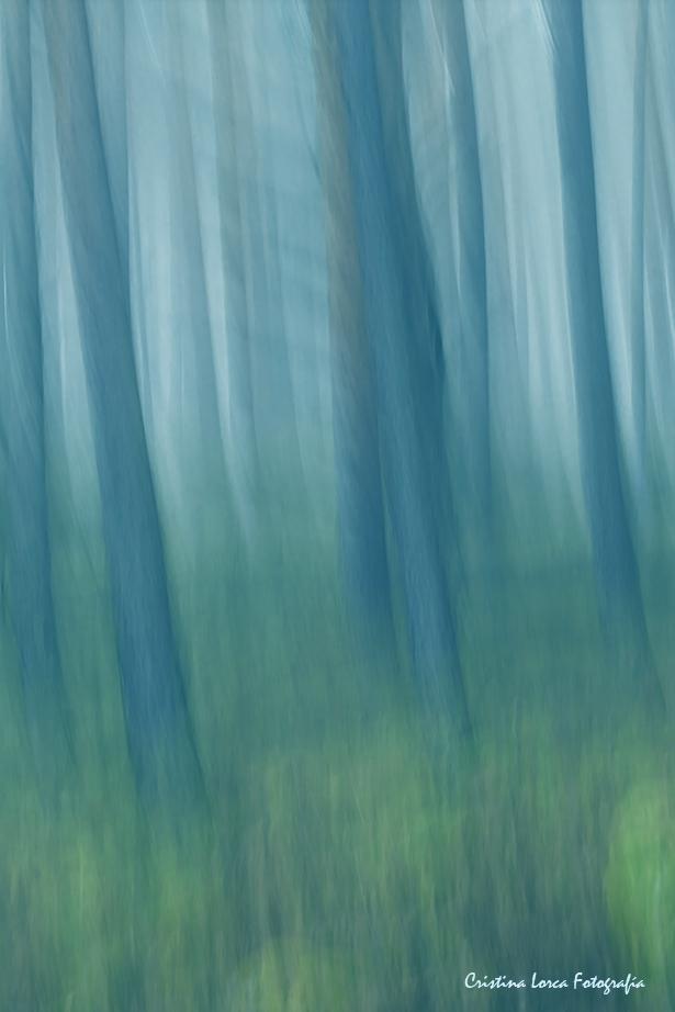 Vientos del Bosque