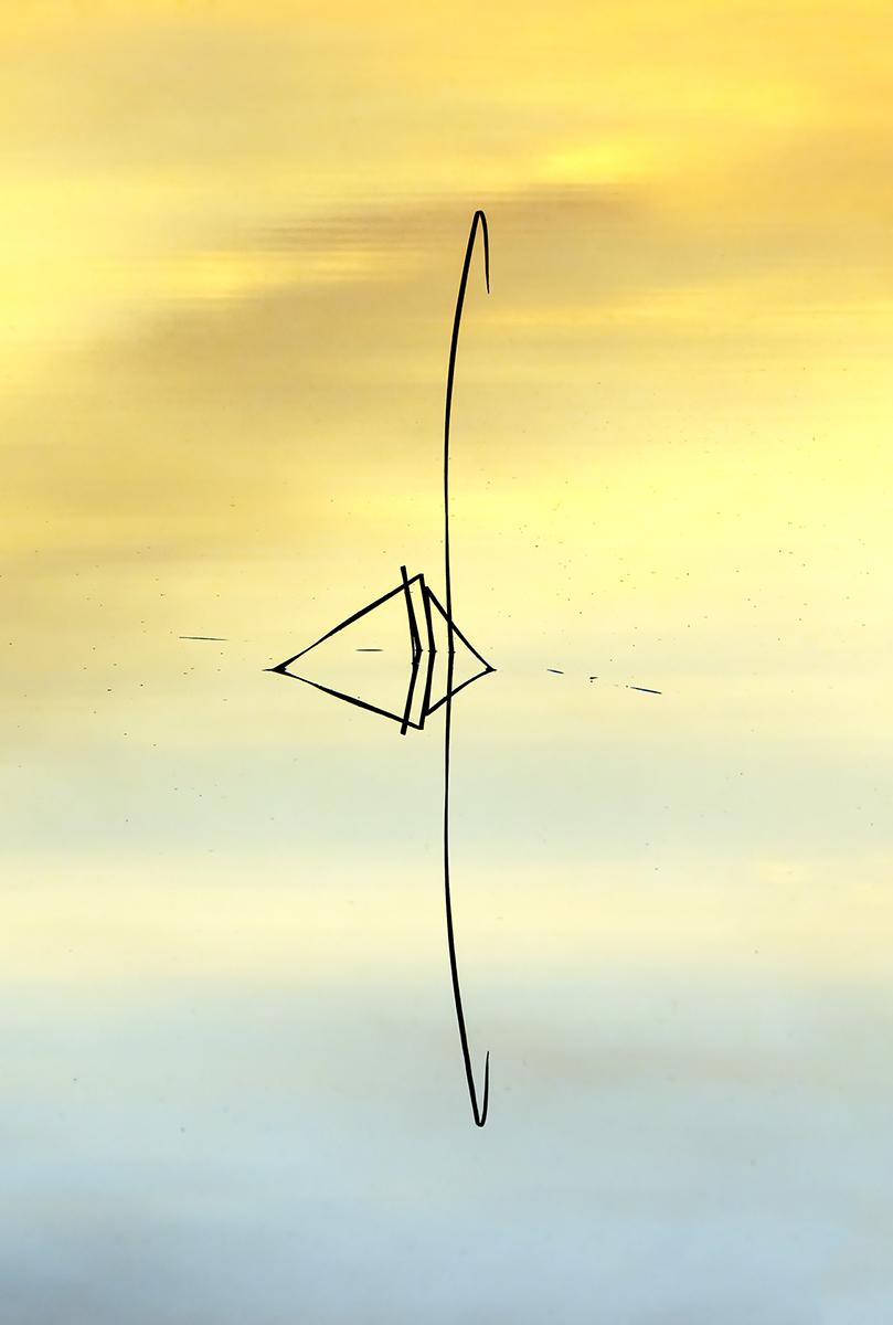 El cisne figurado
