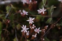 Micro Flores