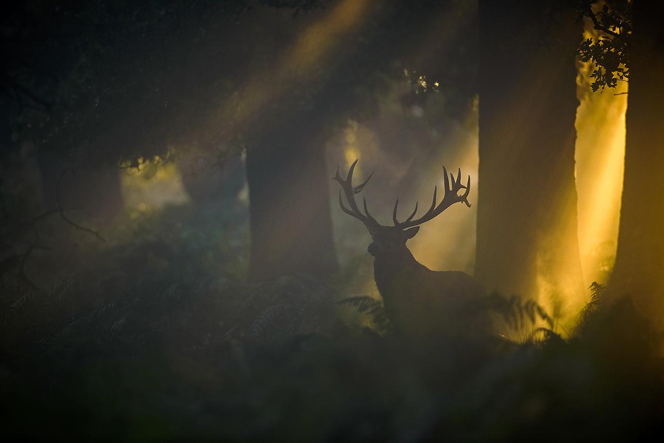 El despertar del bosque