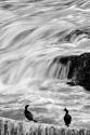 Los cormoranes y el mar